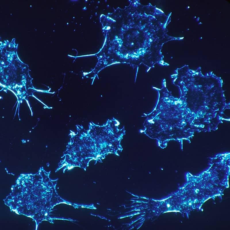 Cancer Bundle
